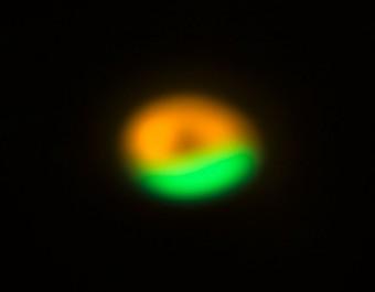 Questa immagine di ALMA mostra la trappola per la polvere nel disco che circonda il sistema Oph-IRS 48. La trappola offre un rifugio sicuro per le minuscole particelle del disco e permette loro di aggregarsi e crescere fino a dimensioni che permettano loro di sopravvivere da sole. La regione in verde mostra l'ubicazione delle particelle più grandi (dell'ordine del millimetro): la trappola per la polvere scoperta da ALMA. L'anello in arancione mostra l'osservazione di particelle molto più piccole (dell'ordine del micron) ottenuta con lo strumento VISIR montato sul VLT (Very Large Telescope) dell'ESO. (Crediti: ALMA (ESO/NAOJ/NRAO)/Nienke van der Marel)