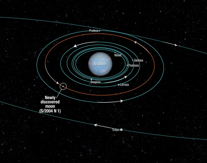 Il diagramma mostra le orbite delle lune più vicine al pianeta Nettuno, tutte scoperte nel 1989 dalla sonda Voyager 2, tra cui si colloca quella della nuova luna scoperta grazie alle osservazione di Hubble. Crediti: NASA, ESA, and A. Feild (STScI)
