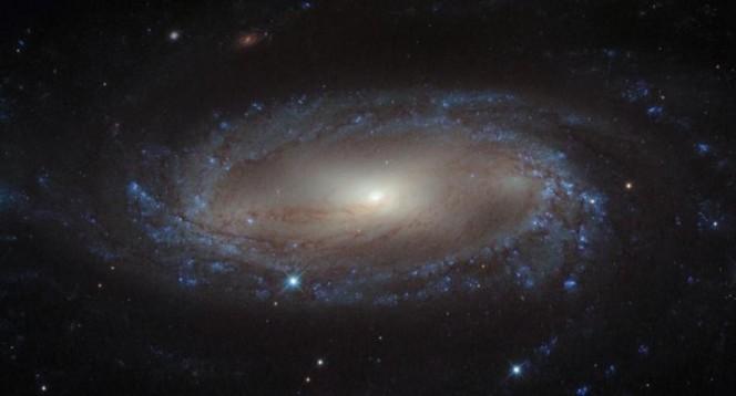 Galassia a spirale IC 2560