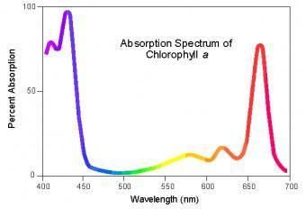 Spettro di assorbimento della clorofilla a. Crediti: University of Wisconsin-Madison