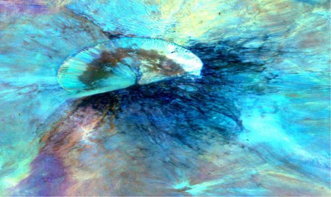Cratere Antonia su Vesta