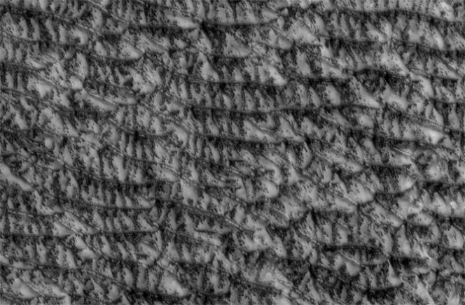 Dune trasversali: seguono le stagioni su Marte. Probabilmente entrando nell'estate marziana, questa regione di dune si macchia con sacche di ghiaccio in sublimazione. Crolli di materiale rivelano la sabbia scura sotto la superficie ghiacciata. Crediti: NASA/JPL-CALTECH/UNIVERSITY OF ARIZONA