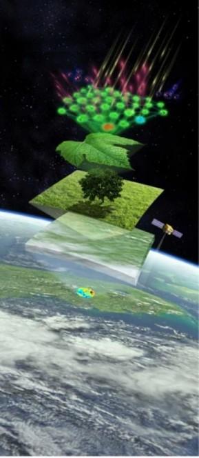 Ilustrazione del metodo per misurare la fotosintesi dallo spazio. Crediti: Keck Institute for Space Studies
