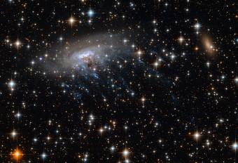 Questa immagine del telescopio spaziale di NASA/ESA Hubble ritrae la galassia a spirale ESO 137-001, circondata dallo sfondo brillante del cluster Abell 3627. Al centro della galssia si vedono delle striature blu chiaro: si tratta di giovani stelle vista all'ultravioletto. Crediti: NASA, ESA. Acknowledgements: Ming Sun (UAH), and Serge Meunier