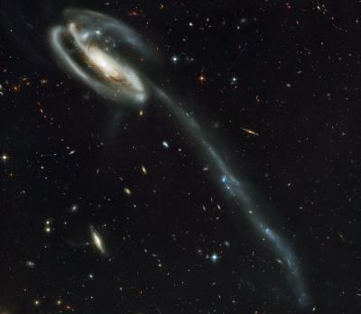 Immagine della Galassia girino (tadpole in inglese) ripresa da Hubble.  Crediti: NASA, Holland Ford (JHU), the ACS Science Team and ESA