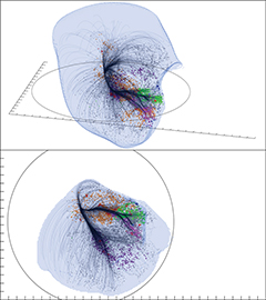 Due prospettive del superammasso Laniakea. La superficie esterna mostra la regione dominata dalla gravità di Laniakea. Crediti: SDvision interactive visualization software by DP at CEA/Saclay, France.