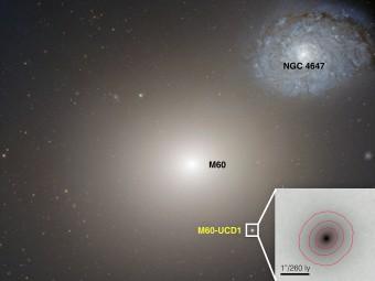 In questa immagine Hubble Space Telescope si scorge la galassia nana ultracompatta M60-UCD1, nella quale è stato trovato un buco nero di dimensioni decisamente atipiche per una galassia così piccola. Probabilmente M60-UCD1 era una galassia molto più grande, i cui strati esterni sono stati risucchiati, qualche miliardo di anni fa, dalla gravità di M60. Crediti: NASA, STSI, ESA
