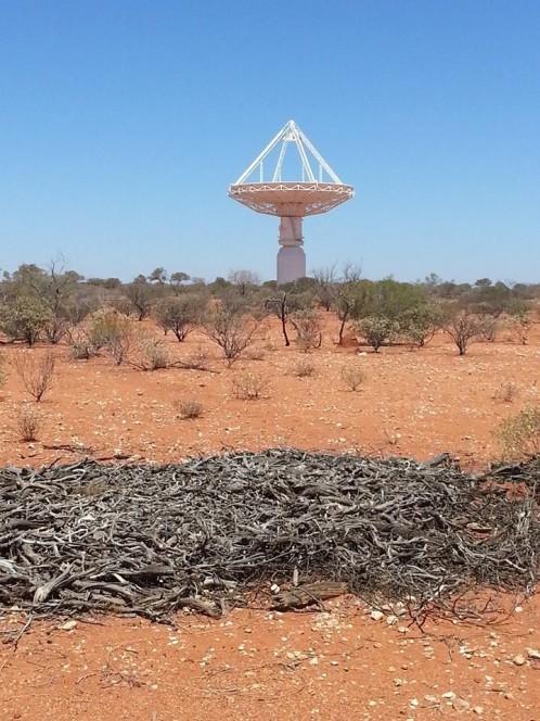 Australian SKA Pathfinder presso il Murchinson Radio Observatory in Western Australia. Crediti: INAF
