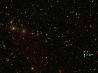 L'ammasso di galassie del Perseo e, indicata dalle frecce, la galassia attiva IC 310. Crediti: Sloan Digital Sky Survey (http://www.sdss3.org/)