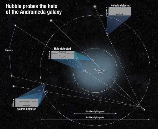 Questo schema mostra come hanno fatto gli scienziati a determinare la dimensione dell'alone della galassia di Andromeda. Poiché il gas dell'alone non emette luce, il team ha osservato la luce dei quasar che attraversava il gas. Il gas del'alone, infatti, assorbe in parte la luce del quasar, rendendola meno intensa in un breve intervallo di lunghezze d'onda. Misurando la diminuzione luminosità di tale intervallo, gli scienziati sono in grado di stimare la quantità di gas presente tra noi e il quasar. Alcuni quasar presenti nel campo di vista non hanno mostrato questa diminuzione di luminosità, permettendo di definire con precisione la dimensione dell'alone. Crediti: NASA, ESA, and A. Feild (STScI)