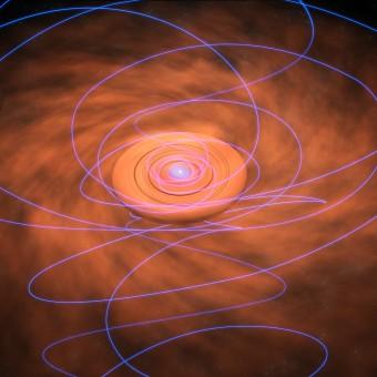 In questa immagine artistica, le linee del campo magnetico, legate al materiale che spiraleggia verso la protostella, si attorcigliano sempre di più via via che ci si avvicina alla stella in formazione. Crediti: Bill Saxton, NRAO/AUI/NSF