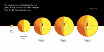 Le stelle simili al Sole, verso la fine della loro vita, diventano giganti rosse. Le giganti rosse con massa pari a quella del Sole non mostrano forti campi magnetici nel loro interno, ma per stelle poco più massicce (1.3, 1.6 e 1.9 volte la massa del Sole, nell'immagine), è stato osservato che fino al 60% delle stelle ospita campi magnetici intensi. Crediti: Università di Sydney