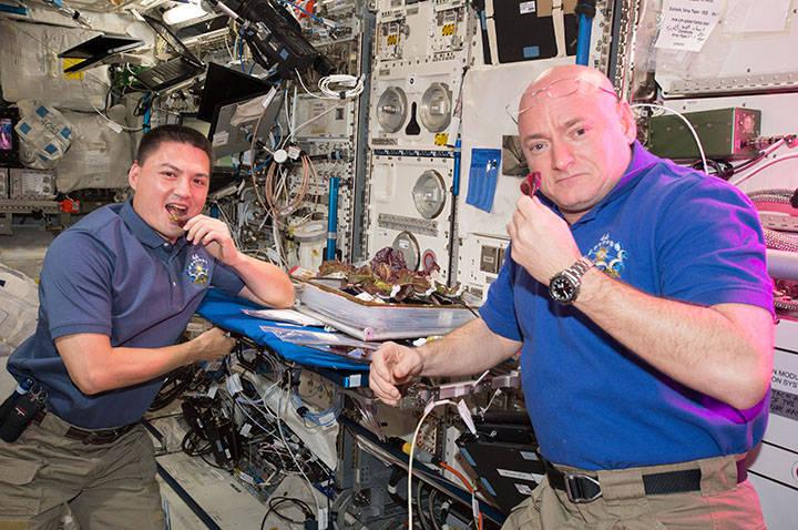 Gli astronauti della NASA Scott Kelly e Kjell Lindgren con le piante raccolte per le indagini VEG-01. Crediti: NASA