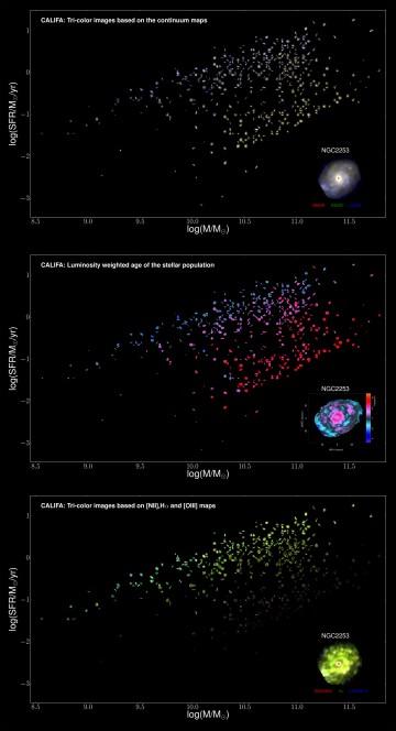 """Le tre figure mostrano una parte delle oltre 600 galassie osservate da CALIFA ordinate da sinistra a destra secondo la loro massa (le galassie piu' """"pesanti"""" a destra) e dal basso in alto secondo la loro attivita' di formazione stellare (in basso le galassie in cui non nascono piu' nuove stelle, in alto quelle in cui ne nascono molte). La prima figura dall'alto mostra come le galassie ci apparirebbero a colori naturali se avessimo occhi sufficientemente sensibili: tra le galassie meno massicce e più attive nella formazione stellare abbondano quelle blu e con tipica struttura a spirale, mentre andando a masse più elevate e tra le galassie che formano poche stelle nuovo abbondano oggetti dal colore più arrossato e tondeggianti senza spirali. Nelle altre due figure si nota come CALIFA ci consegni delle vere e proprie mappe di """"parametri fisici misurati"""": l'età delle stelle (nel pannello centrale) cresce spostandosi dalla parte alta alla parte bassa della sequenza, mentre la quantita' di gas (il serbatoio da cui nascono le stelle) rappresentata nell'ultimo pannello diminuisce. Crediti: S. F. Sanchez, C. J. Walcher and the CALIFA Team"""