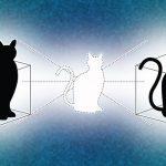 I ricercatori di Yale hanno dato al gatto di Schrödinger una scatola in più in cui giocare. Crediti: Michael S. Helfenbein/Yale University