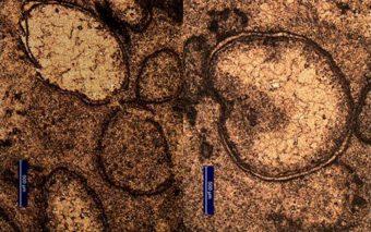 Un'immagine al microscopio delle sferule da impatto ritrovate nel sito di Marble Bar, nel nord ovest dell'Australia. Crediti: A. Glikson