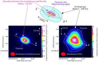 (Sopra) Illustrazione schematica del gas ricadente intorno alla protostella, dove esiste una struttura a disco, con un raggio di circa 50 unità astronomiche, circondata da un involucro di gas esteso oltre le 200 UA. Solfuro di carbonile è presente nel gas dell'involucro, mentre formiato di metile esiste soprattutto nella zona di confine tra il gas e la struttura del disco. (Sotto) Distribuzione di intensità di formiato di metile (sx) e del solfuro di carbonile (dx) osservata con ALMA. Crediti: ALMA (ESO/NAOJ/NRAO), Oya et al.