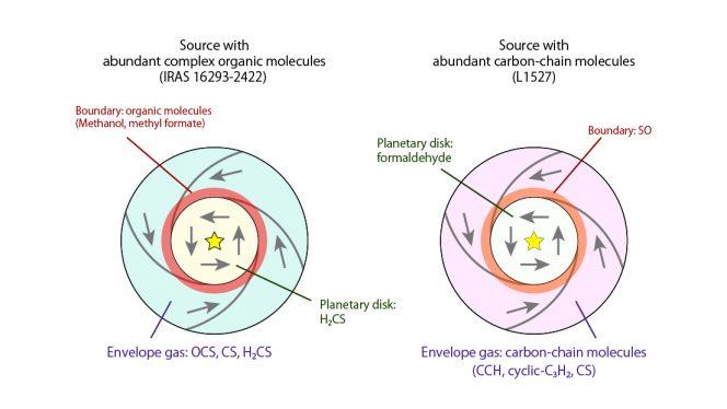 Illustrazione schematica della distribuzione molecolare intorno alle protostelle. Nel caso di IRAS 16293-2422A (sx) risultano abbondanti i le molecole organiche complesse sature, mentre in L1527 sono abbondanti molecole organiche complesse insature e il contorno è caratterizzato da SO (ossido di zolfo). Crediti: ALMA (ESO/NAOJ/NRAO), Oya et al.