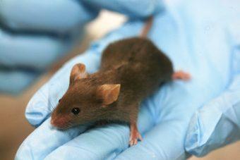 mouse-lab