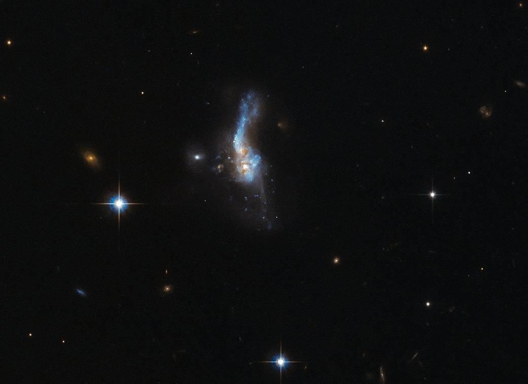 Lo scontro galattico immortalato da Hubble, i proiettili di dimensioni planetarie scagliati da un buco nero e lo studio dei pesci per i problemi legati lla microgravità